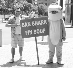 Ban Shark Fin Soup